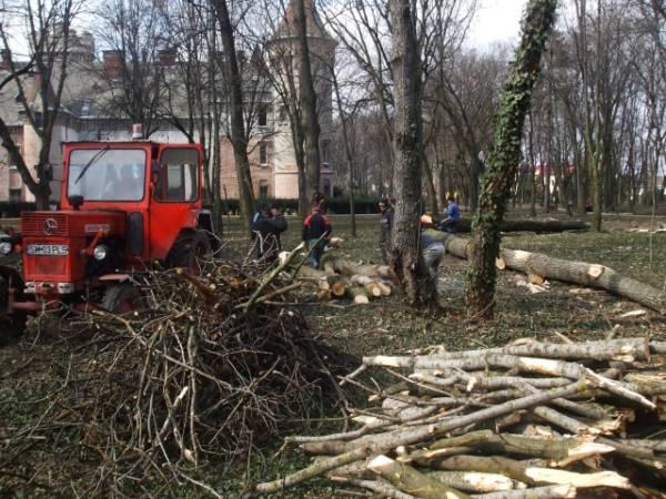 Copacii cumpăraţi de Primărie pentru Parc s-au uscat!