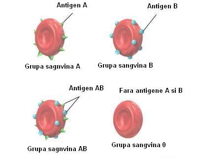 Personalitatea fiecărei grupe de sânge