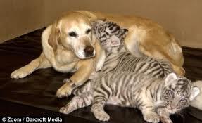 Zooterapia: animale care vindecă oameni