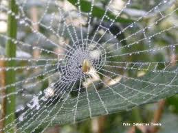 Păianjenul