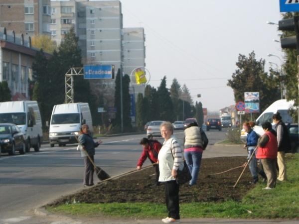 Reamenajarea spaţiilor verzi in Carei