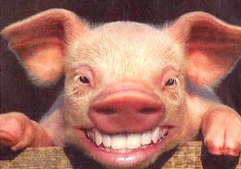 Este posibil ca în România să fi ajuns carne contaminată cu dioxină