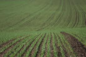 Unde a dispărut un milion de hectare de teren arabil
