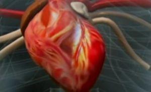 O simplă injecţie ar putea reface complet muşchiul inimii după un infarct