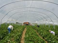 Precizări privind accesul cetăţenilor români pe piaţa forţei de muncă  din Olanda