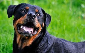 Decedat în urma muşcăturilor unui câine