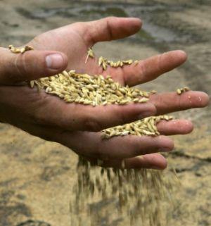 Guvernul a decis să aplice taxarea inversă la cereale şi plante tehnice, începând cu 1 iunie 2011
