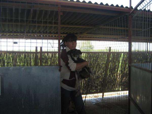 Asociaţia Puffi recupereză câinii de la hingheri