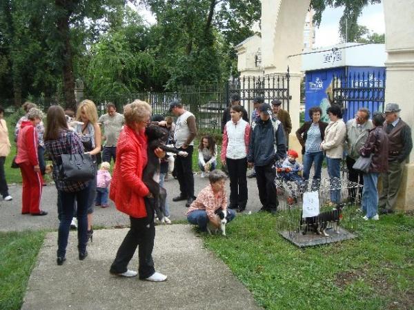 Asociaţia Puffi a organizat primul  Târg de adopţii în Carei