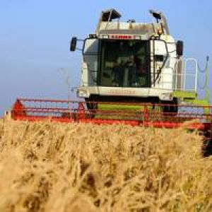 Producţie record la grâu: oficialii vorbesc de o recoltă de peste opt milioane tone