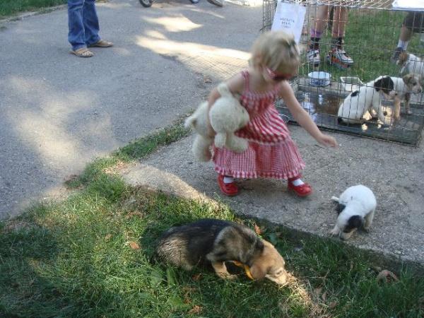 7 căţei şi-au găsit stăpân la Târgul de Adopţii