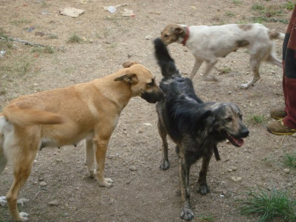Câinii careieni sub lupa unei comisii