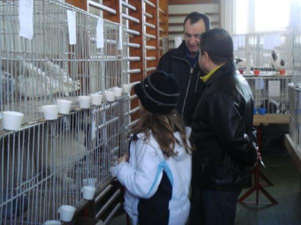 Peste 40 de rase de porumbei la Expo Colibri