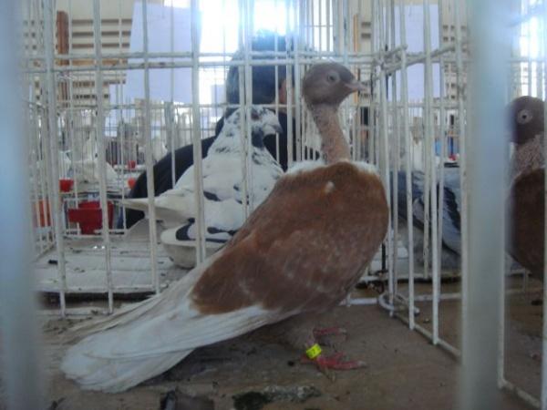 Expoziţia Naţională de păsări şi animale mici