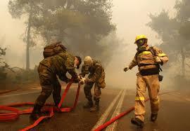 Incendiu la o pădure de gorun