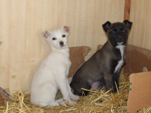 Adoptă un prieten de Ziua Internaţională a Animalelor Fără Stăpân