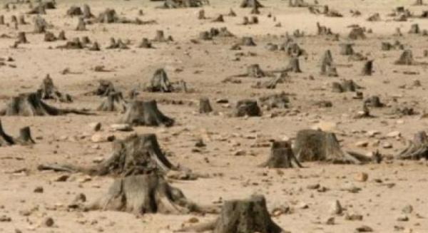 Fenomenul care distruge România. Zeci de hectare de păduri au fost rase de hoţi, în Harghita