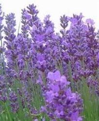 5 plante vindecătoare pe care trebuie să le ai in casă