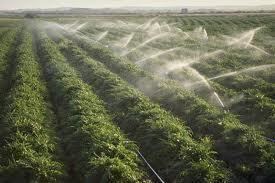 Constantin: Producătorii agricoli pot beneficia, de joi, de energie mai ieftină cu 20% pentru irigaţii