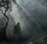 O pădure din Cluj a intrat într-un top al celor mai bântuite destinaţii turistice