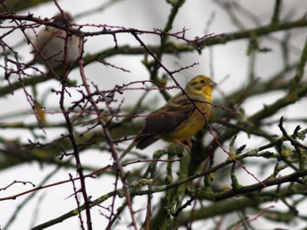 Inventarierea păsărilor de apă