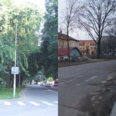 Un ieșean trimite o scrisoare deschisă autorităților referitoare la tăierile de copaci din Carei