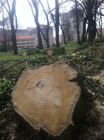 Deşertificarea României.Oraşele trebuie să aibă cel puţin trei copaci la un locuitor