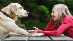 Invenţie: aparatul care ne permite să vorbim cu animalele