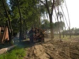 Furt de material lemnos
