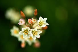 Natura-splendoare şi încântare.Vernisaj