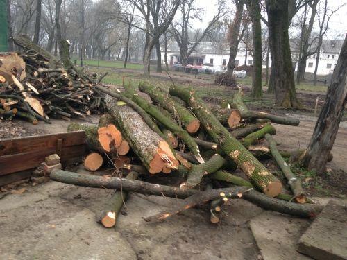 Raport Greenpeace România: 42% din tăierile ilegale depistate în 2016 au fost semnalate de cetățeni