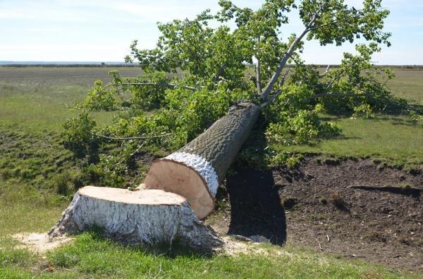 O afacere dubioasă cu lemn pentru mobilier