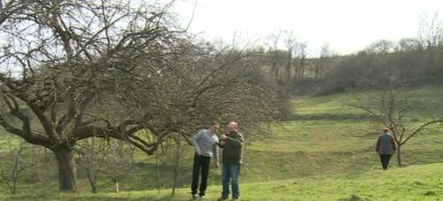 Cercetătorul care vrea să salveze merele românești