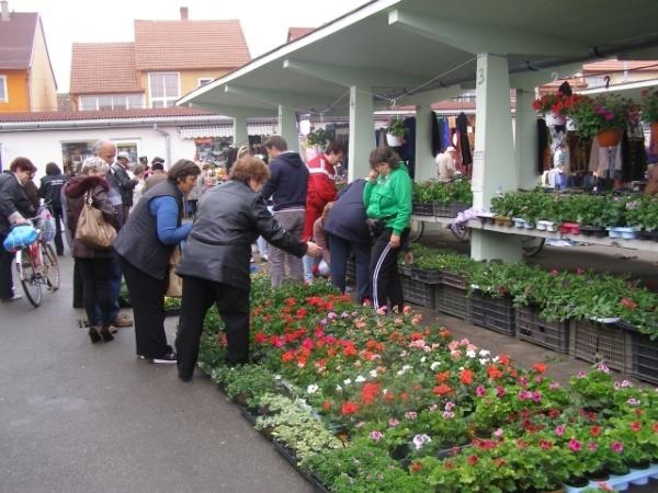 Flori şi răsaduri pe alese în Piaţa din Carei