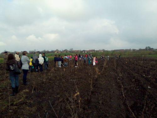 Plantări de puieţi la Tiream