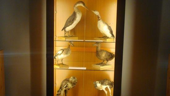 """Vernisajul expoziţiei ,,Obiecte din colecţia de ştiinţele naturii a Muzeului Municipal Carei"""""""