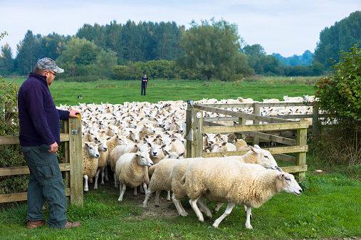 Proiecte  agricole prioritare la fondurile europene în 2015