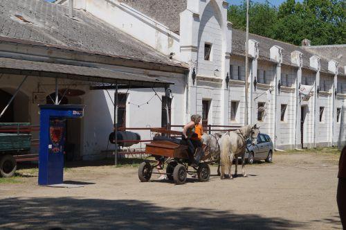 Grija pentru animale a DSVSA. Pe când şi pentru caii din Parcul Dendrologic?