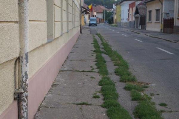 Au înverzit trotuarele la Carei