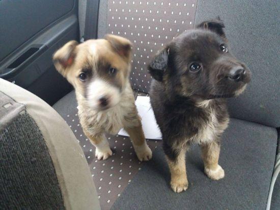 Cruzime! Doi pui de căţel lăsaţi să moară în frig la marginea unui drum din Carei