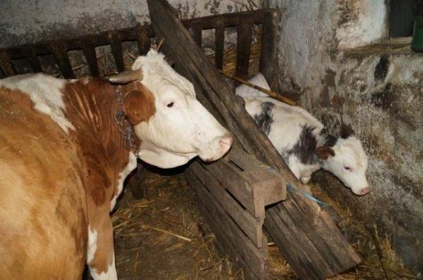 O gospodărie cu animale din Marna-Nouă