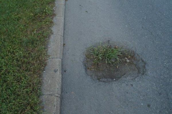 Iarba din asfaltul de pe Calea 25 Octombrie din Carei