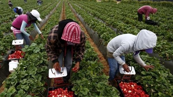 Zeci de români abuzați, din nou, pe plantațiile din sudul Italiei