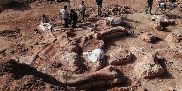 Dinozaurii din Hațeg, unici în lume. Braconierii de dinozauri