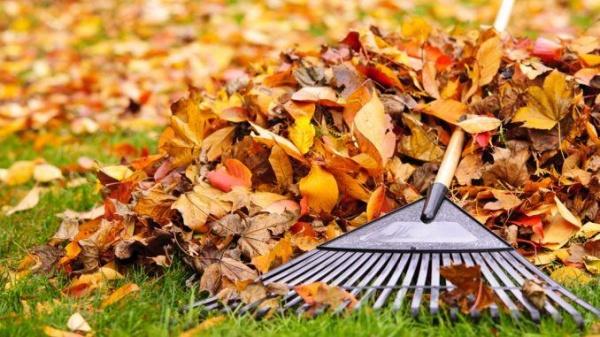 Deşeurile vegetale de la careieni se strâng  începând cu 6 noiembrie
