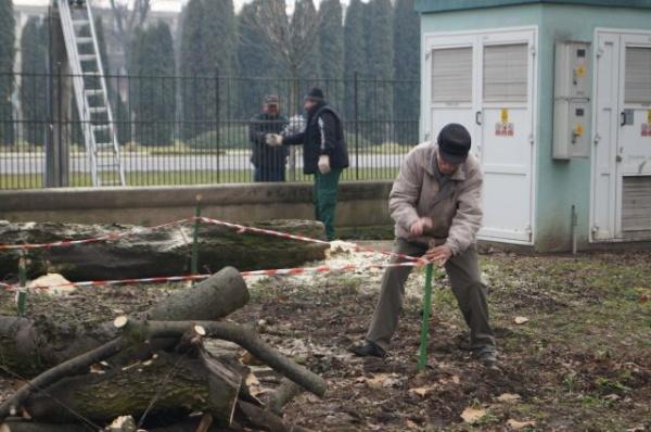 Se caută un agronom cu experiență în organizarea de evenimente pentru a administra Parcul Dendrologic