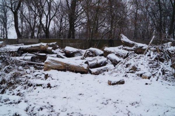 Depozitul de copaci tăiaţi din parcul Carei
