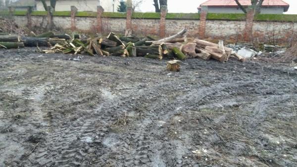 Depozitul de lemne din Parcul Dendrologic. Golit, abandonat şi fără aviz de construcţie