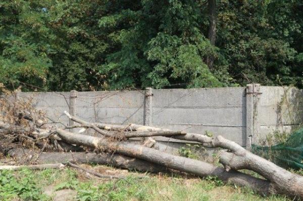Construcție ilegală din Parcul Dendrologic demolată la semnalările Buletin de Carei și intervenția Direcției județene pentru Patrimoniu