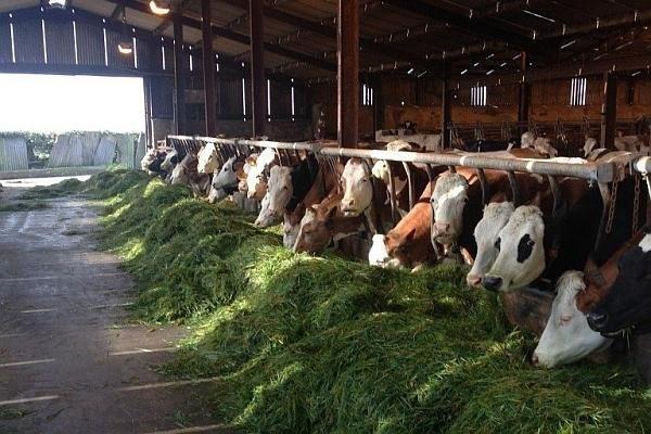APIA a început plata ajutorului de stat pentru creșterea animalelor